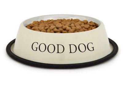 Какво трябва да знаем за храненето на кучето