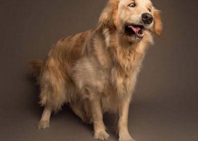 Обратно кихане при кучето
