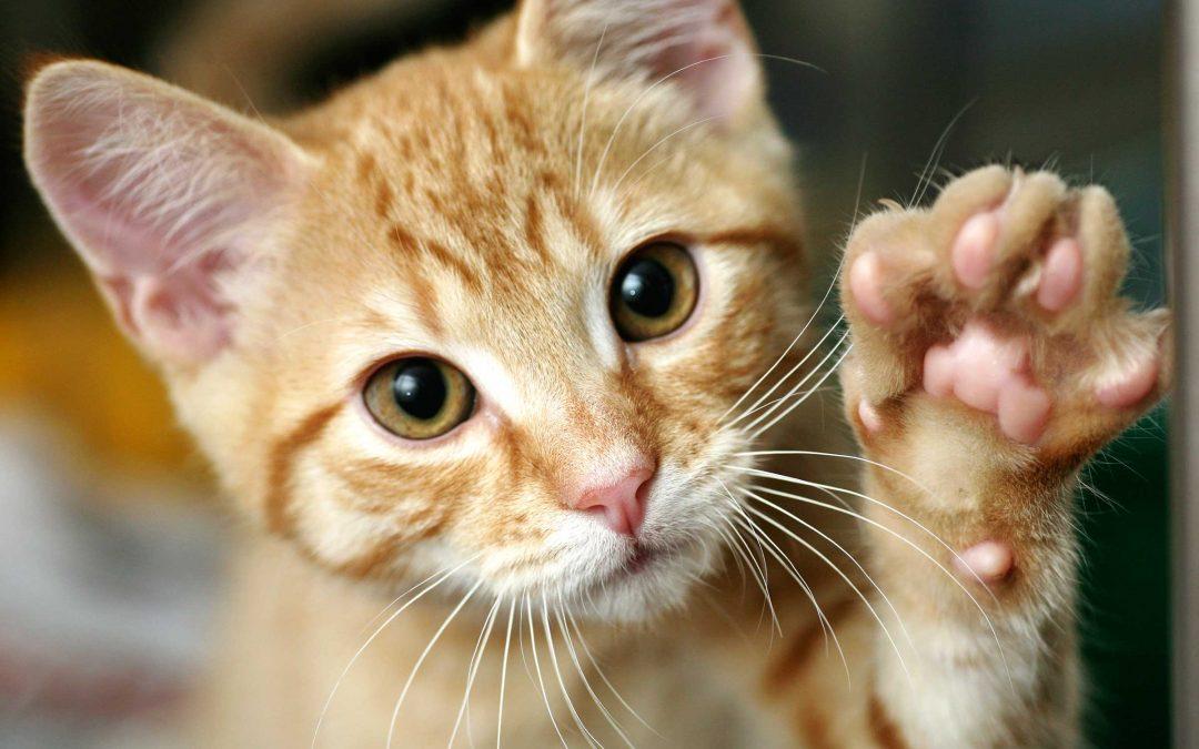 Котките и стреса