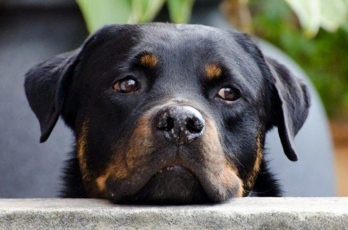 Спиралата на болката – остеоартрит при кучето