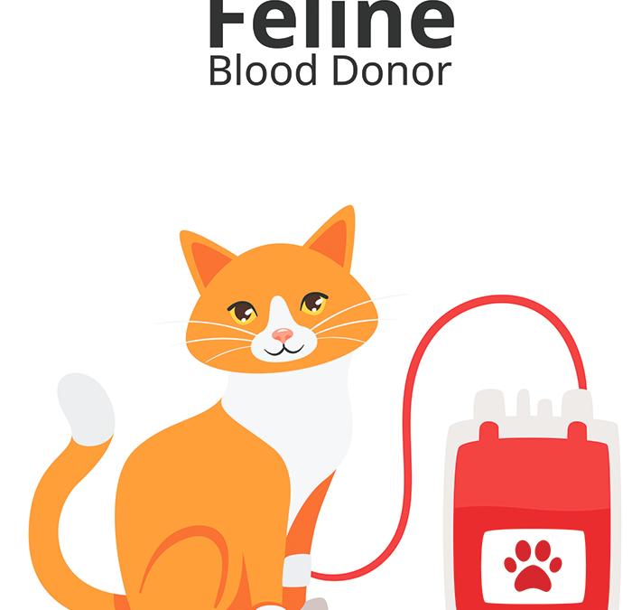 Кръвопреливане при котките
